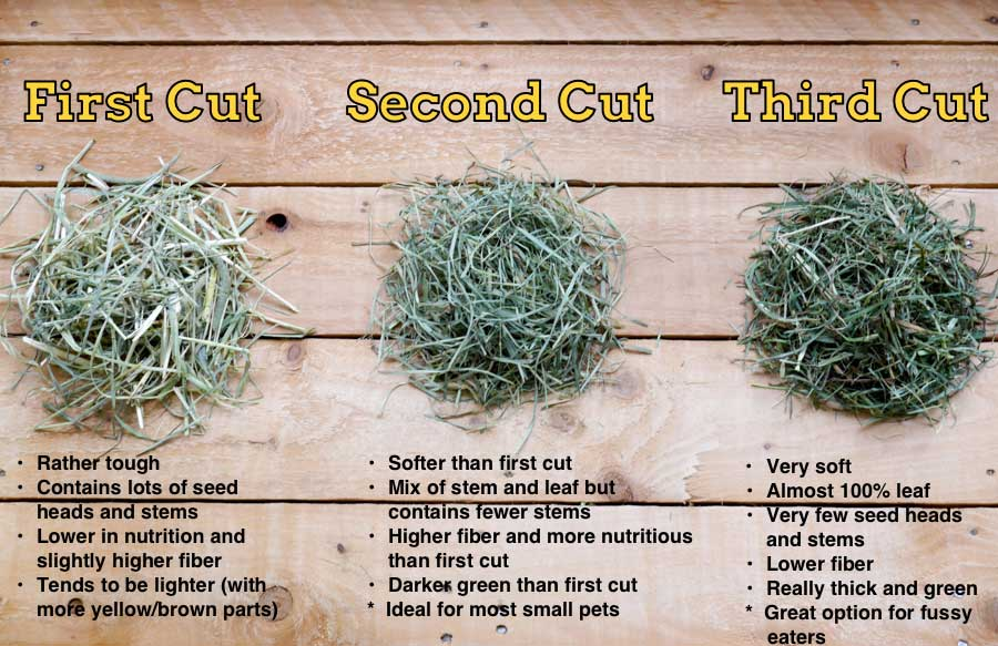 about-the-cut