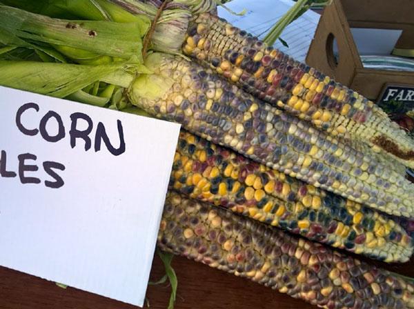 indian-corn