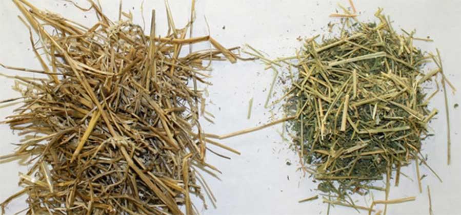 straw-hay
