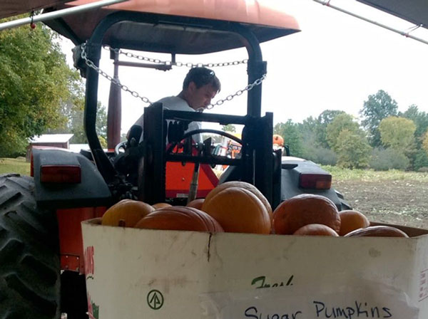 Wholesale Pumpkins available from Wagon Wheel Farm Goshen NY